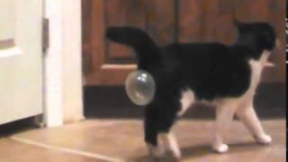 Не давайте жвачку своим кошкам(, 2015-11-13T18:04:03.000Z)