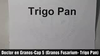 TRIGO PAN: CAP 5 (GRANOS FUSARIUM-GRANOS DAÑADOS)
