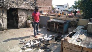 VK pigeon loft in theni || Pigeon form || wonderpets