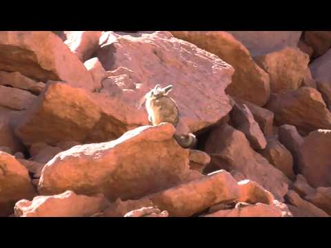 Atacama Desert, Chile: Flora, Fauna and Hot Springs