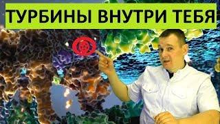 Нанотурбины в клетках. СУПЕР ТЕХНОЛОГИЯ ПРИРОДЫ - Синтез АТФ.