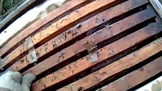 Пчеловодство  Ревизия семей 28.02.2017  Чистим подмор