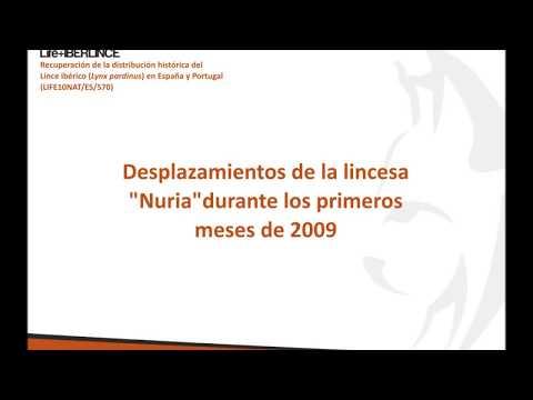 Desplazamientos lince Nuria desde Andujar al Cabril 2008-09