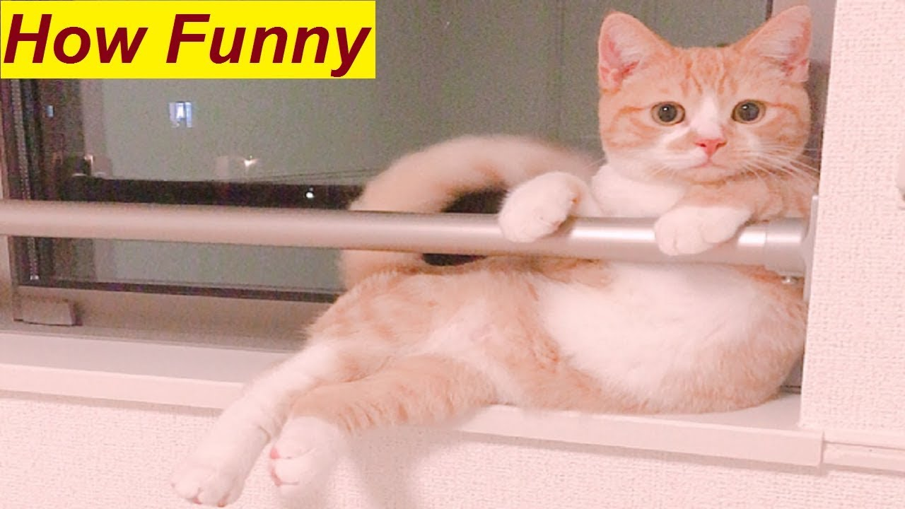 Top 10 Funniest Cat s Sitting Style Ever Cat Sits like a Human