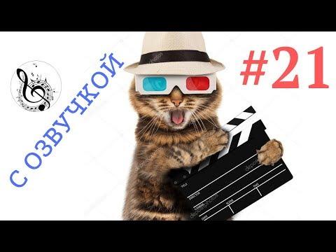 Приколы с животными смешные животные ТОПовая ПОДБОРКА # 21