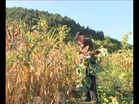 U 91 uzgaja povrce In 91 years grown vegetables