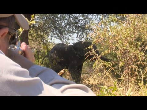 Elephant Hunting In The Caprivi