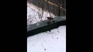 хищные птицы Беларусь