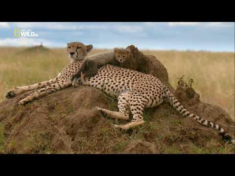 Nat Geo Wild: Рожденные в Африке. Школа выживания