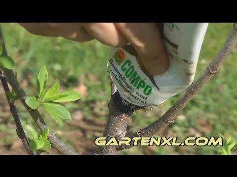Super Baumwachs: Wundverschluss an Bäumen und Sträuchern - YouTube #AF_37