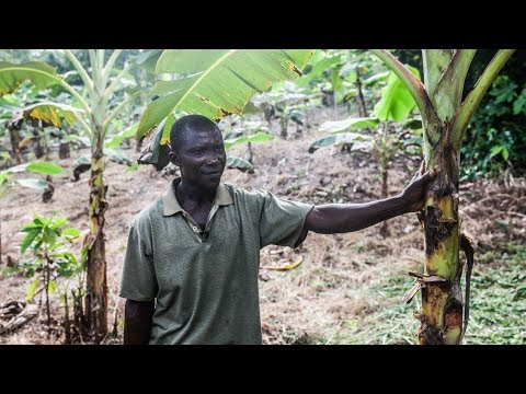 Can land rights save Ghana's Cocoa?