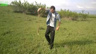 Longest Snake / Самый длинный змей