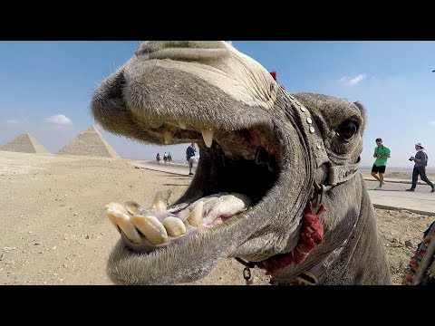 An Egyptian adventure - 4K travel video
