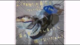 とっても甘えん坊な我が家犬デス(*^^*) これからも宜しくねッ(*´ω`*)
