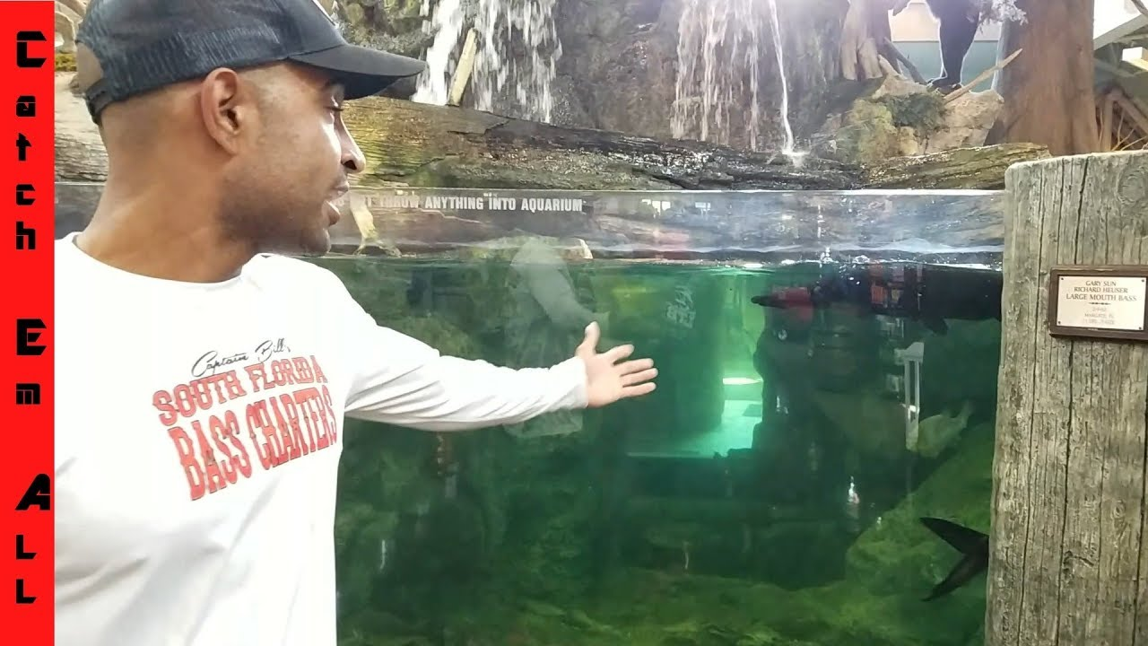 Put my pet fish in bass pro shops pond youtube for Bass pro monster fish
