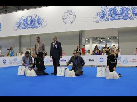World Dog Show 2016 Moscow, Maltese