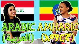 similarities-between-arabic-and-amharic