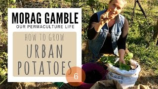 How to Grow Urban Potatoes by Morag Gamble: Our Permaculture Life