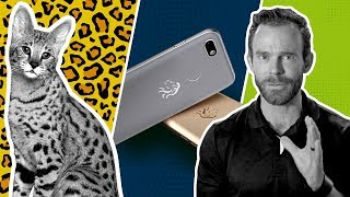 Ecom News | Africa phone | Google's CEO | Apple TV | Future of malls | Therapy cat clinic | 10 cents