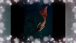 Real Mermaid Found - BEAUTY OF MERMAID