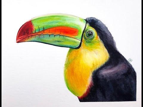 Toucan Bird in Watercolors Painting Demonstration