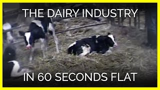 The Dairy Industry in 60 Seconds Flat