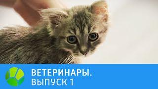 Ветеринары. Пти-брабансон, котёнок, ёжик, кролик | Живая Планета