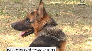Белгородская кинологическая служба УФСИН обучает собак по нескольким профилям