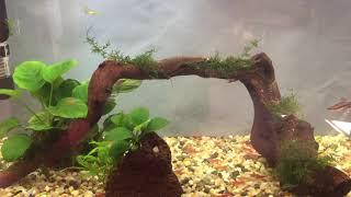 Мой маленький аквариум. После перезапуска.