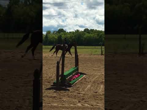 "Hunter Jumper Course 18"" on Heza Classie Act"