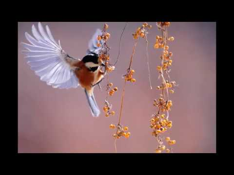 Good Morning Birds Pictures Images Wallpapers Photos Pics
