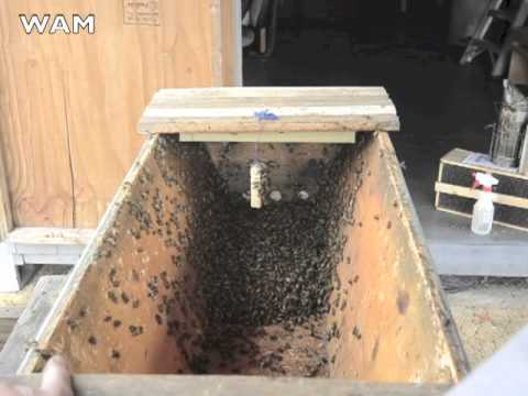 Installing the First Package of Bees in a Top-Bar Hive