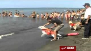 الكلاب تنجد الغرقى في الشواطيء الايطالية