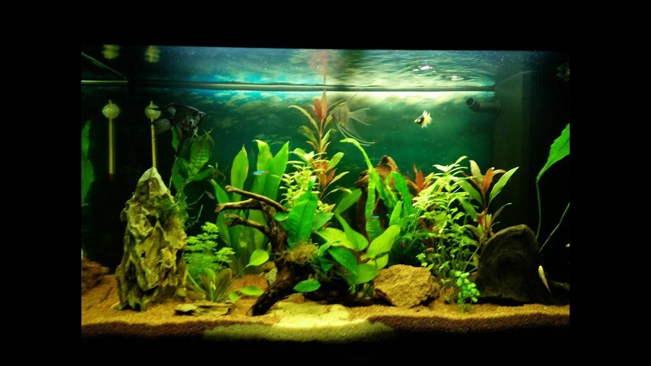juwel rio 125 aquarium youtube. Black Bedroom Furniture Sets. Home Design Ideas