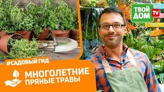 Секреты выращивания: розмарина, базилика и шалфея | Сеем базилик правильно | Огород на подокононнике