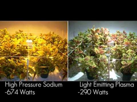 Plant Experiment Light Emitting Plasma Youtube