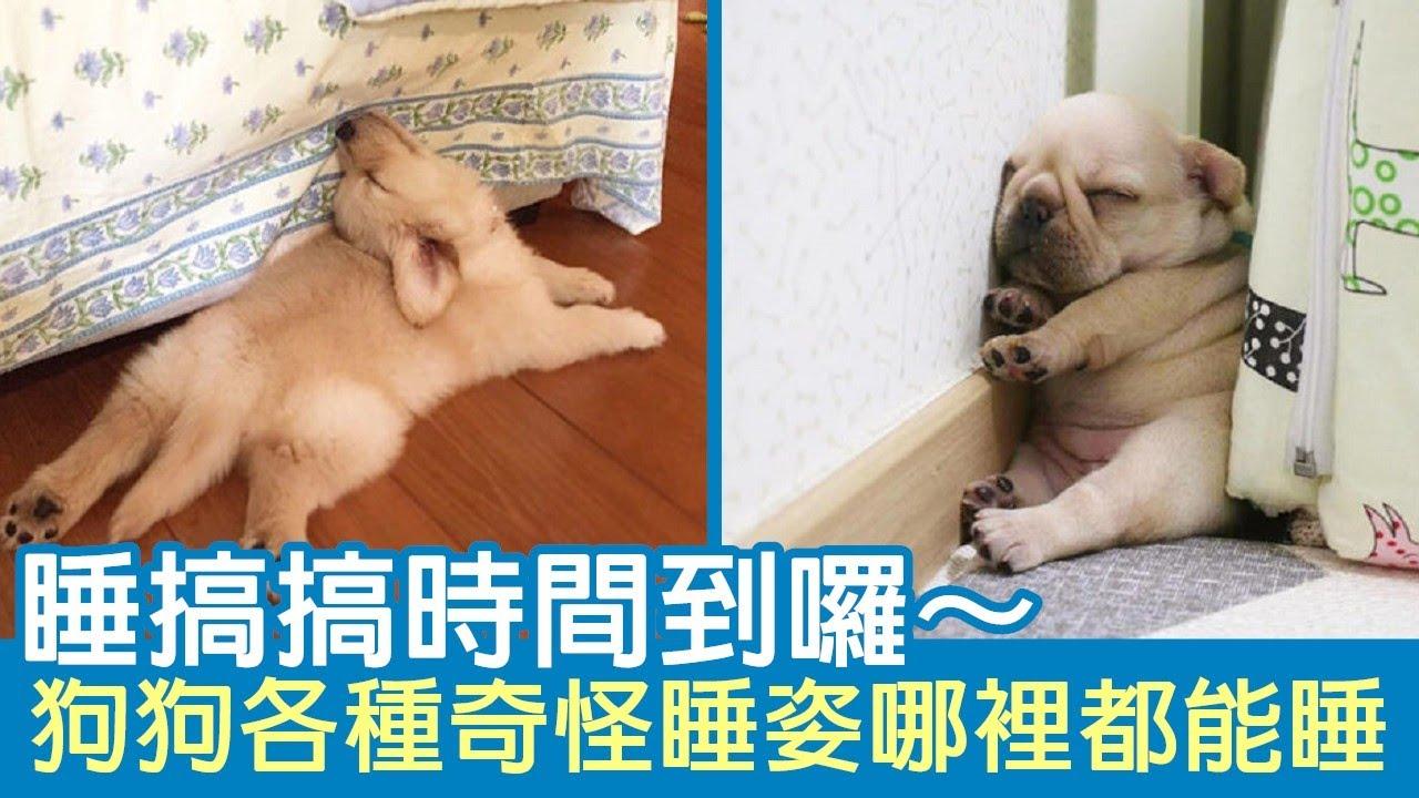 睡搞搞時間到囉~ 狗狗各種奇怪睡姿哪裡都能睡
