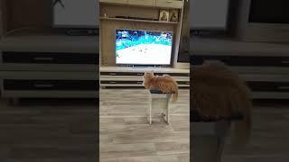 кошка смотрит матч Россия германия