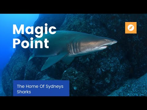Magic Point Shark Dive