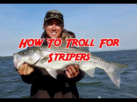 How To Troll For Stripers No 85