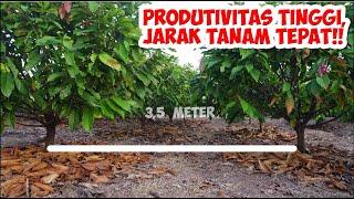 Download Lagu Jarak Tanam Kakao yang Ideal mp3