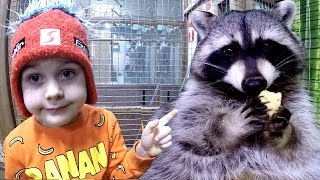 At the ZOO | Little Baby Tim Feeds Animals Funny Raccoon | Old Macdonald Had a Farm Song