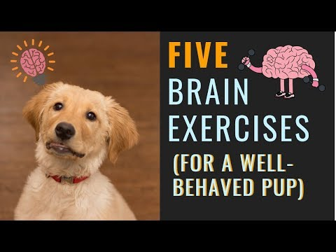 Dog Mental Exercise (For A More Relaxed Dog)