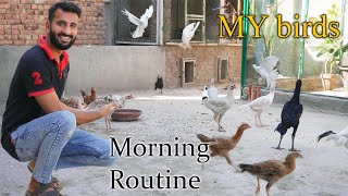 Me And My Birds Morning Routine 😍|| Pets Vlog