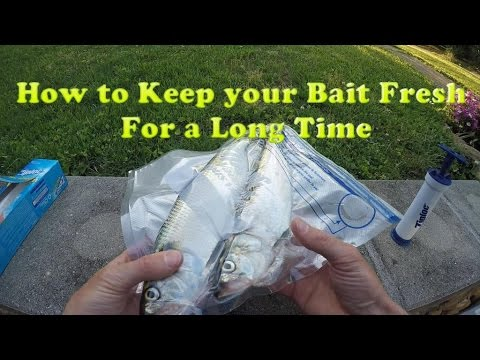 How To Keep Bait Fresh For A LONG TIME