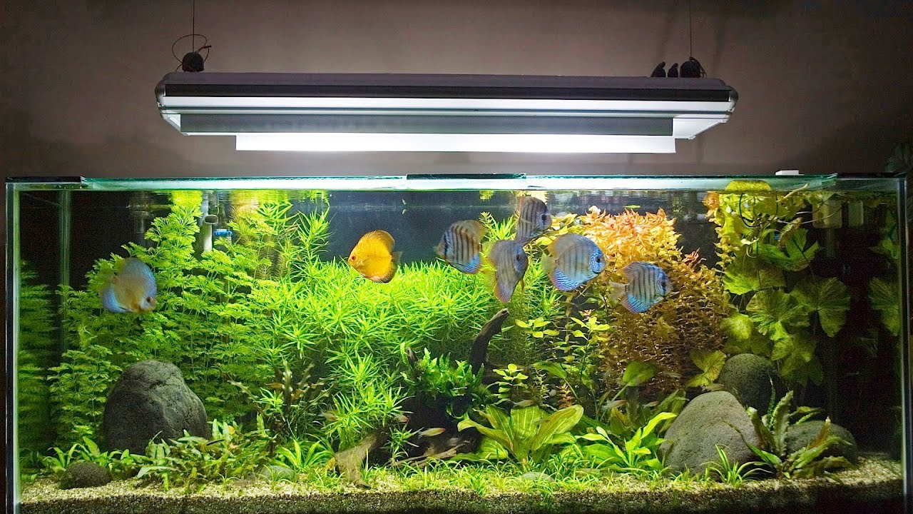 How to set up fish tank maintenance chart aquarium care for Setting up a fish tank