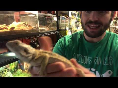 Pet Store Virtual Field Trip at Petland Norwin!