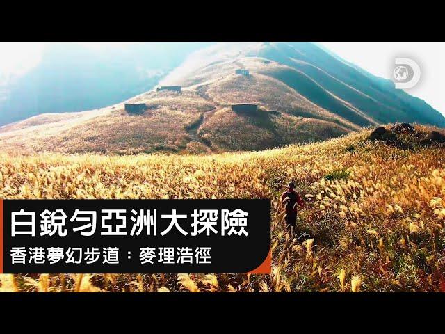 探訪全球20大夢幻山徑 ! 香港近郊竟藏有原始壯麗山林?《白銳勻亞洲大探險:香港麥理浩徑》