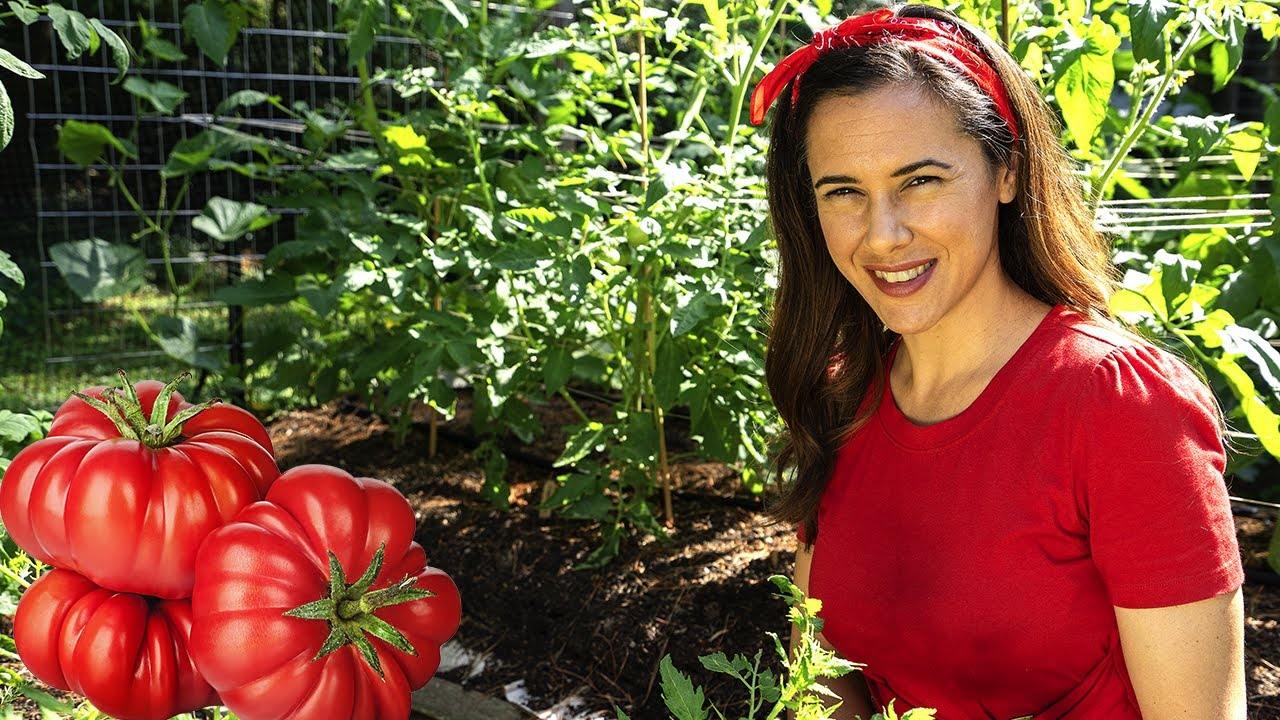 How to grow tomatoes that taste AMAZING | Home Gardening: Ep. 6