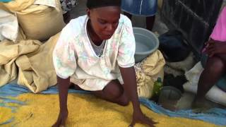 Haiti's Government Abandons Farmers as Food Prices and Hunger Escalate Throughout the Country